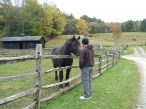 Joel bonded with Zeb, the museum's Percheron, on the way out.