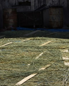 The rye dries outside the scene shop. Photo: Claire McAdams